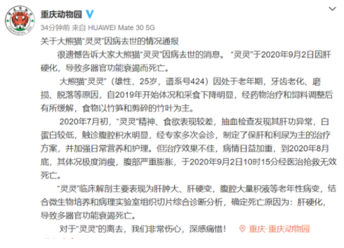 重庆动物园25岁大熊猫灵灵去世  经医治抢救无效死亡