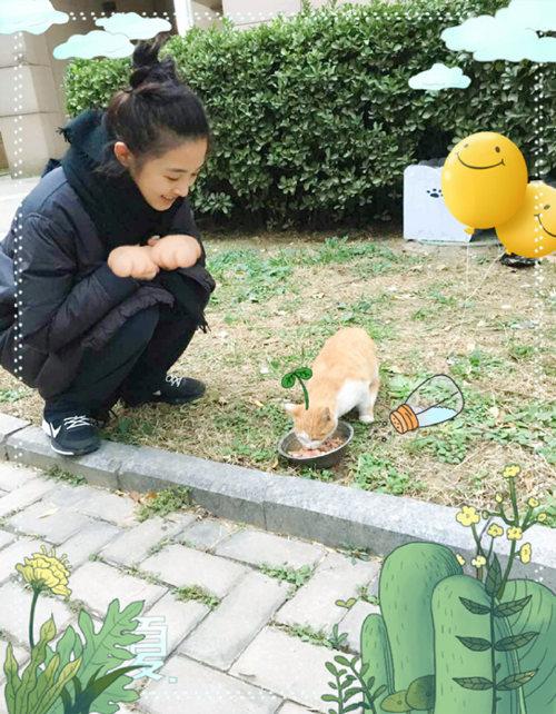 张含韵暖心喂食流浪猫 呼吁关爱小动物
