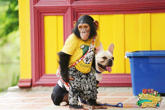育与娱乐的融合,《神奇伙伴》为动物类综艺节目提供了全新样本