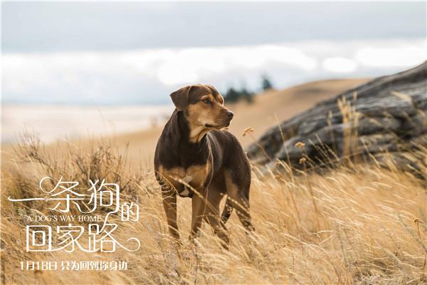 【美天棋牌】《一条狗的回家路》全国公映