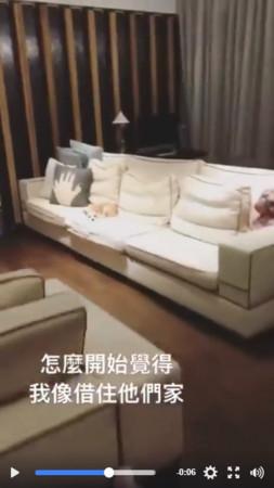 萧亚轩晒自己的4只爱犬 豪宅客厅曝光