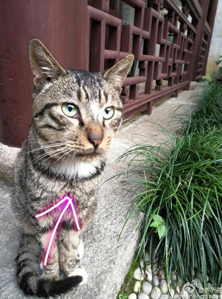 陈乔恩自夸是美女:猫咪看到我都流口水
