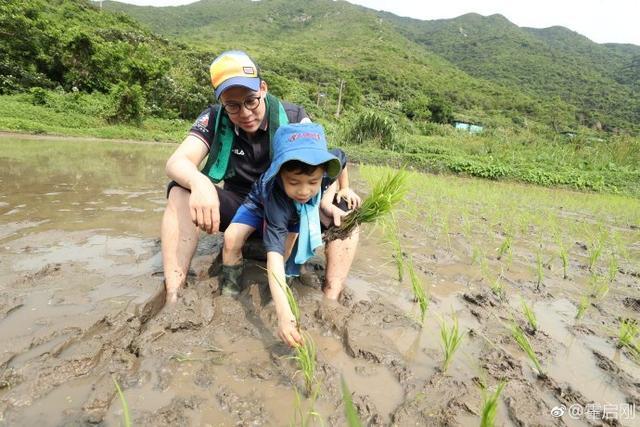 郭晶晶霍启刚带儿子下地插秧,穿人字拖腿上沾满了泥巴
