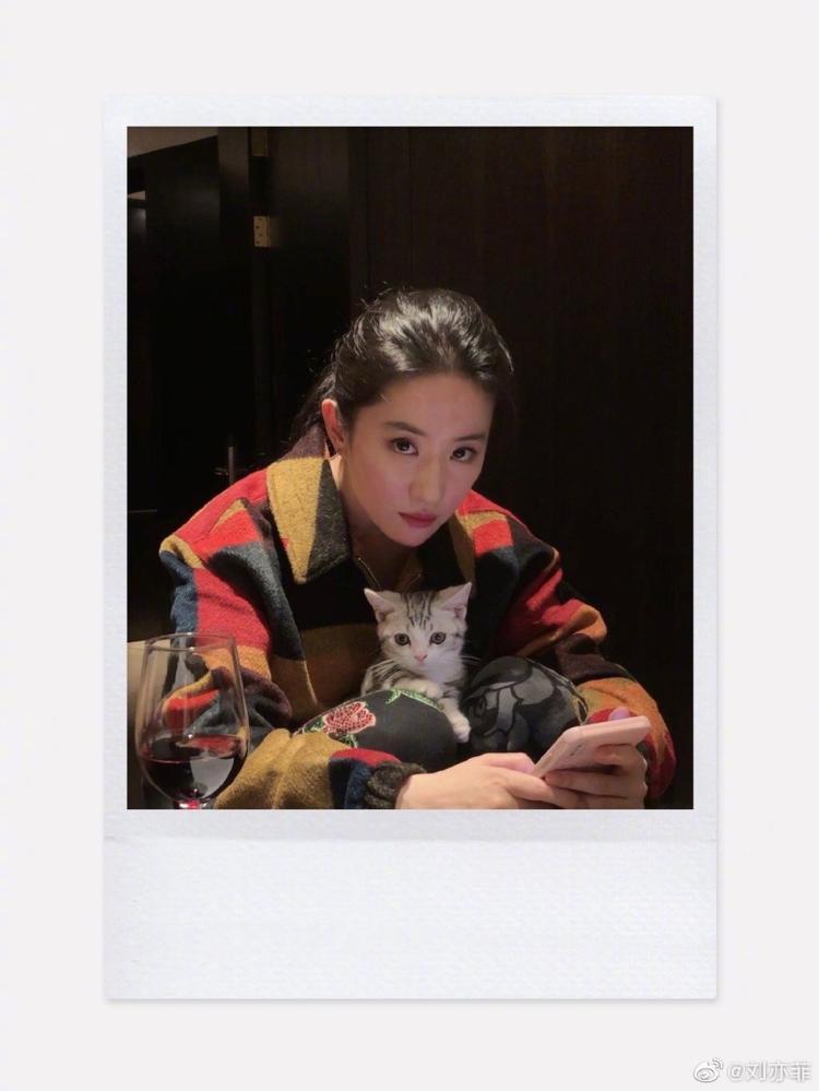 我要评论可爱!刘亦菲晒与小猫合影画面软萌温馨
