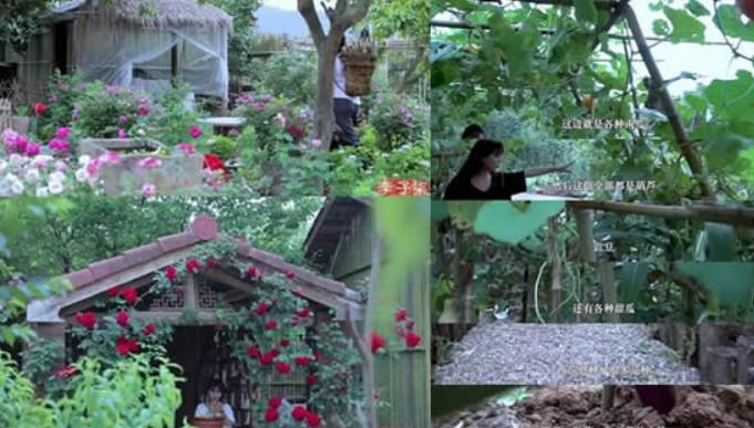 李子柒家的院子全景图 这才是镜头背后的真实农家