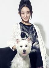 赵丽颖携爱宠拍写真 与猫咪惬意互动萌态十足