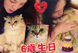 舒淇发文为爱猫庆祝六岁生日 网友:好想做那只猫咪!