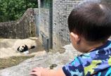 张歆艺儿子沉迷看熊猫 不肯回家被妈妈吐槽